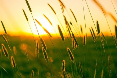 Solopgang over kornmark